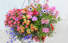 Colorful Flower Basket With Petunias, Lobelia, Geranium And Bidens