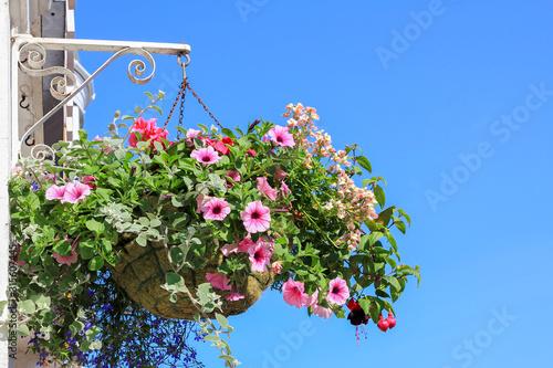 Canvas-taulu hanging flower basket with petunias, lobelia, fuchsia and vervein