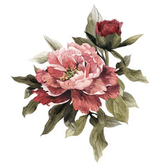 Fototapeta Kwiaty Bouquet of peonies, watercolor, can be used as greeting card, invitation card for wedding, birthday and other holiday and summer background.