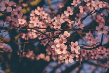 Beautiful Spring Tree Branch W...