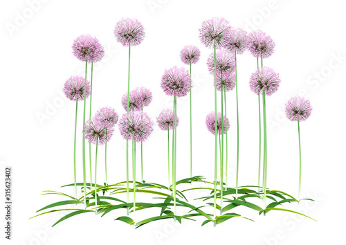 Photo 3D Rendering Allium Flowers on White