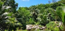 Selective Focus, Tropical Isla...