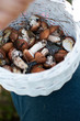 grzyby w koszyku jesień zbieranie grzybów
