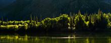 Taiga Forest On The Steep Moun...