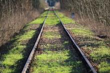 Railway In Forest