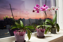 On The Windowsill Of The Balcony Are Orchid Flowers