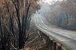 Leinwanddruck Bild - Australian bushfires: burnt eucalyptus tree along the road at Blue Mountains. Road sign is twisted by the heat of the bushfire