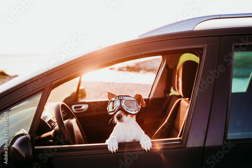cute dog traveling in a car wearing vintage goggles at sunset Tapéta, Fotótapéta