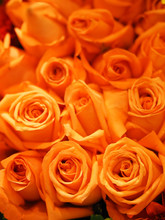 Orange Rose Flower Arrangement Beautiful Bouquet On Blurred Of Nature Background Symbol Love Valentine Day