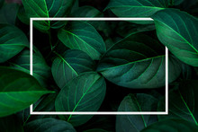 Tropical Leaves With White Fra...