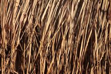 Dry Reed Leaves As Background