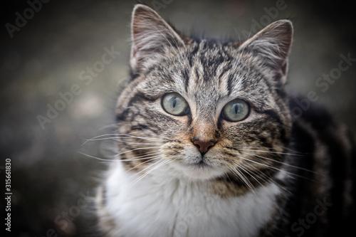 Photo chat sur un fond en ciment