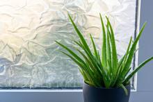 Aloe Vera House Plant Leaves S...
