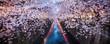 canvas print picture - Nakameguro Sakura Festival in Tokyo