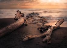 Sea Rocks And Tree Trunks Beac...