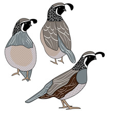 Vector Quail Birds In Black, B...