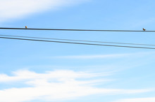 2 Birds Sitting On A Wire On S...
