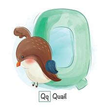 Animal Alphabe Q