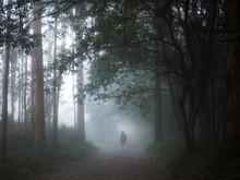 Mystic Fog With Pilgrim In The...