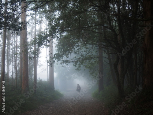 Photo Mystic fog with Pilgrim in the early morning on the road to Santiago de Compostela, Camino de Santiago, Way of St