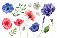 Watercolor Set Of Flowers. Ane...