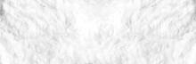 Closeup Animal White Wool Shee...