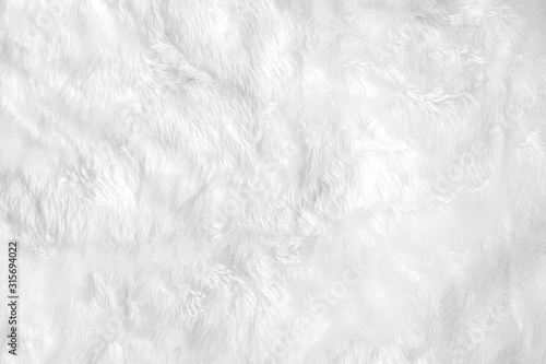 Fotografía Closeup animal white wool sheep background in top view light natural detail, grey fluffy seamless cotton texture