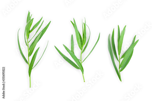 Fototapeta tarragon or estragon isolated on a white background. Artemisia dracunculus obraz