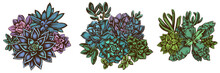 Flower Bouquet Of Colored Succulent Echeveria, Succulent Echeveria, Succulent