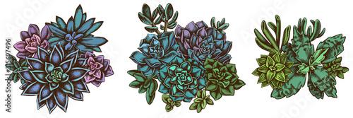 Fototapeta Flower bouquet of colored succulent echeveria, succulent echeveria, succulent obraz