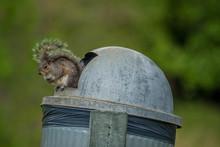 Squirrel Sitting On A Garbage ...
