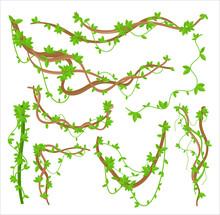 Green Liana Plants Creepers Flat Vector Illustrations Set