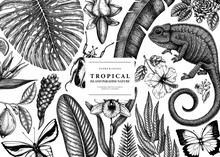 Tropical Banner Design. Vector...