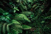 Tropic Leaf Background Jungle ...