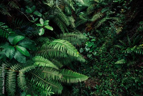 tropic leaf background jungle leaves