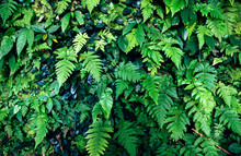 Fern Forest Background Nature ...