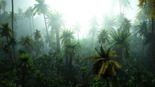 Jungle In The Fog, Palm Trees ...