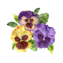 Watercolor Spring Card With Pansy Flowers. Hand Painted Flowers And Leaves Isolated On White Background. Holiday Illustration For Design, Print, Fabric Or Background.