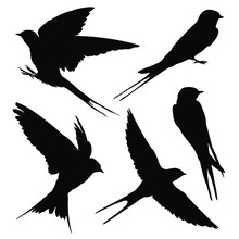 Swallow Silhouette Set. Vector Illustration