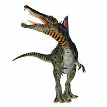 Spinosaurus Dinosaur On White ...