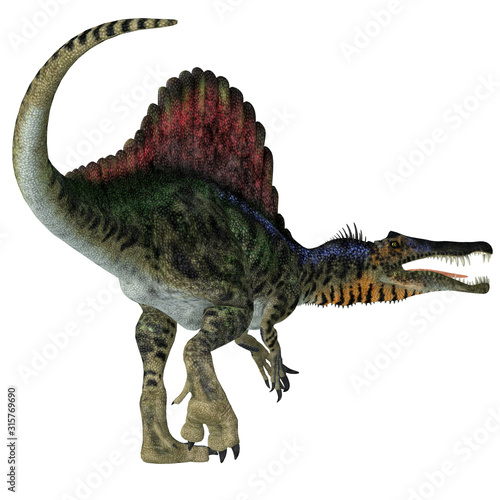Photo Spinosaurus Dinosaur Tail - Spinosaurus was a carnivorous dinosaur that hunted in Africa during the Cretaceous Period