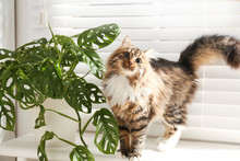 Adorable Cat And Houseplant On Window Sill At Home