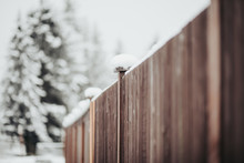 Winter Fence And Trees