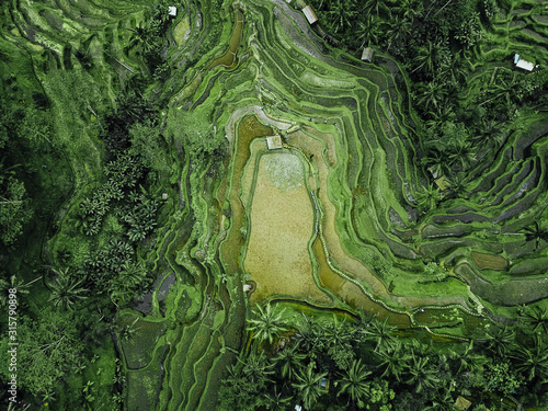 Birds eye view of green rugged hilly topography Fototapeta