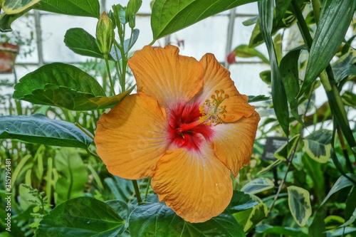 Photo artsy flower