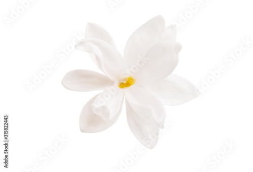 lilac flower closeup isolated