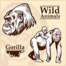 Head Gorilla And African Femal...