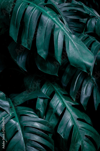 Fototapete - green leaf background, tropical leaf, abstract green leaf texture