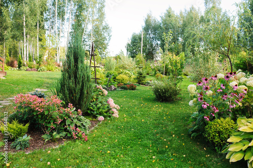 Obraz summer garden view with blooming perennials, Hydrangea paniculata, conifers, hostas. Cottage garden style - fototapety do salonu
