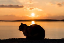 Cat Silhouette At Sunset Enjoying The View